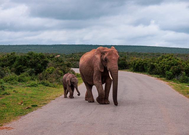 חוות פילים, טיול מאורגן לדרום אפריקה