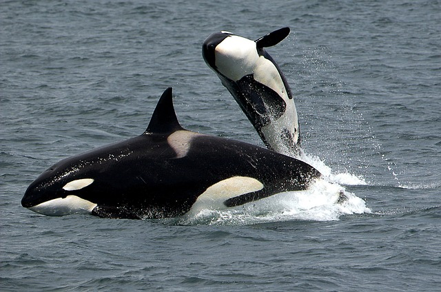 שייט לויתנים