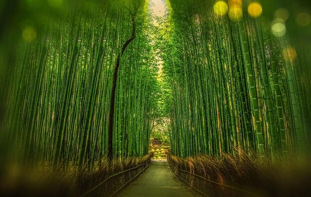 קיוטו, טיול ליפן